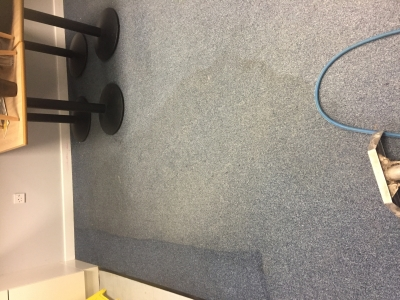 Carpet with a cleaning line across the water mark.